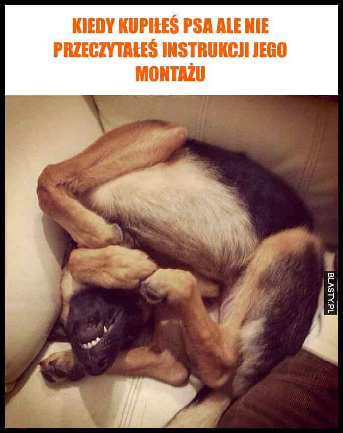 Kiedy kupiłeś psa ale nie przeczytałeś instrukcji jego montażu