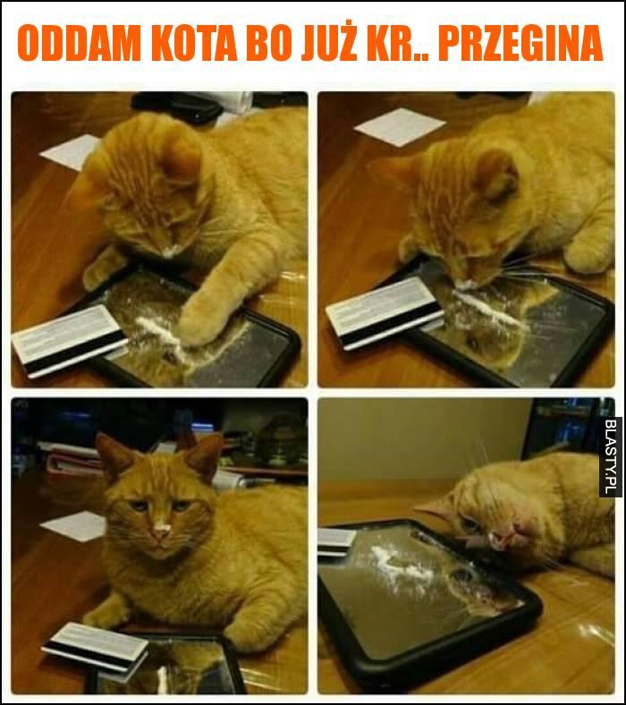 Znalezione obrazy dla zapytania oddam kota za darmo bo przegina
