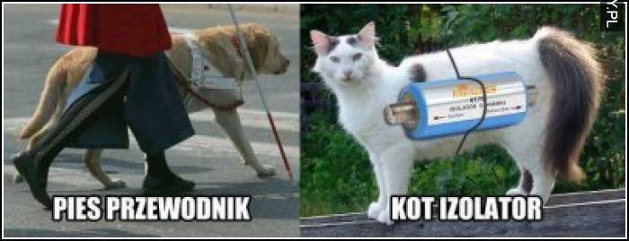 Pies przewodnik vs kot izolator