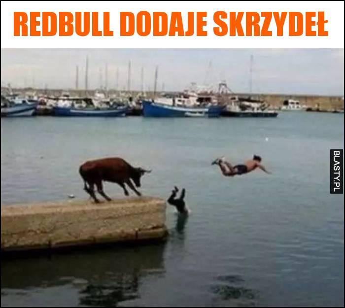 Redbull dodaje skrzydeł