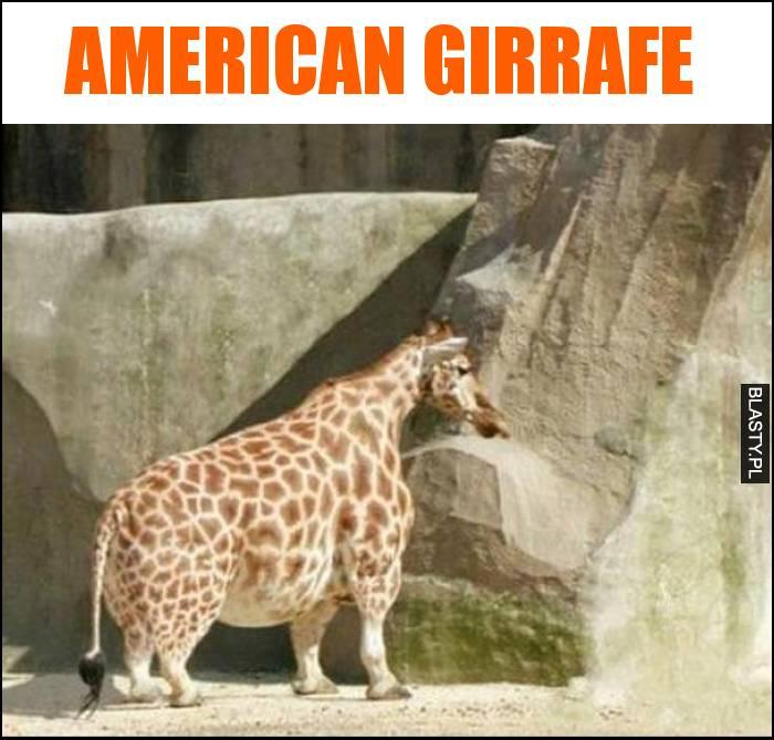 American girrafe
