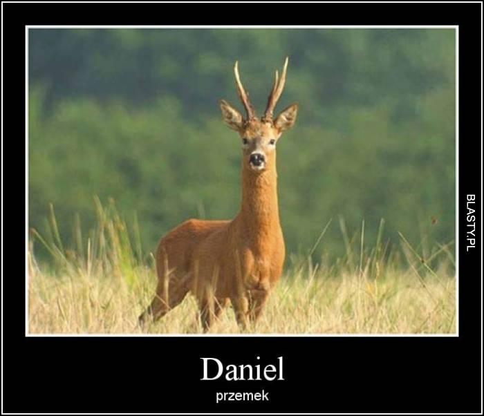 Daniel -  przemek