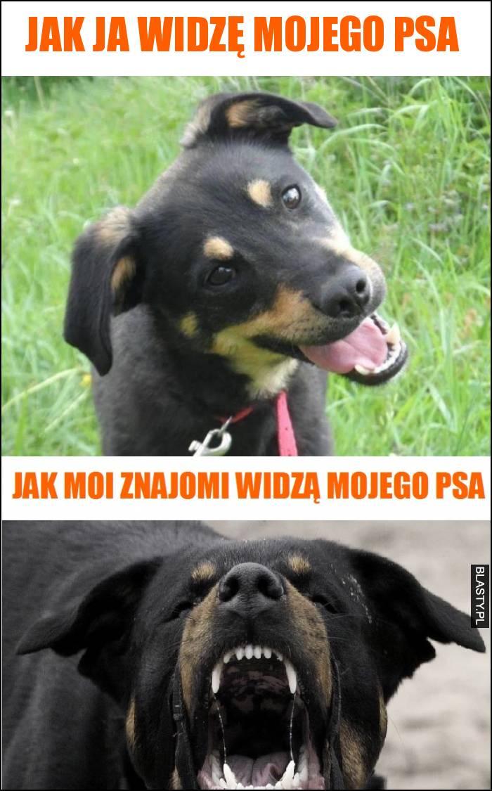 Jak ja widzę mojego psa vs jak widzą go moi znajomi