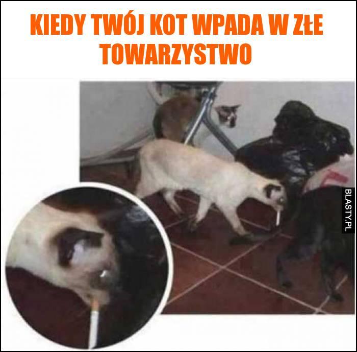 Kiedy twój kot wpada w złe towarzystwo