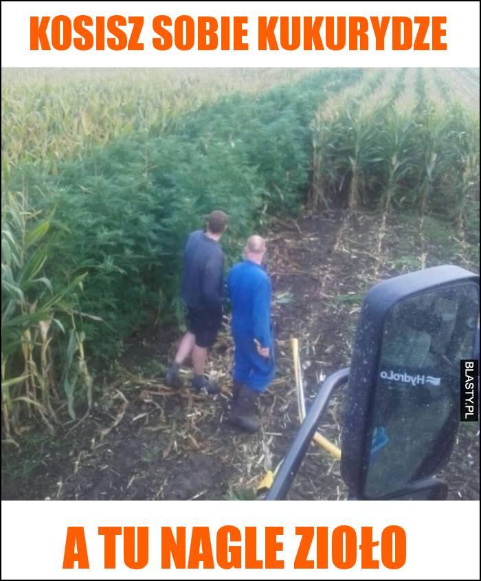 Kosisz sobie kukurydze a tu nagle zioło