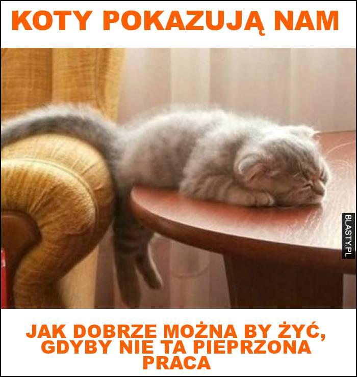 koty pokazują nam