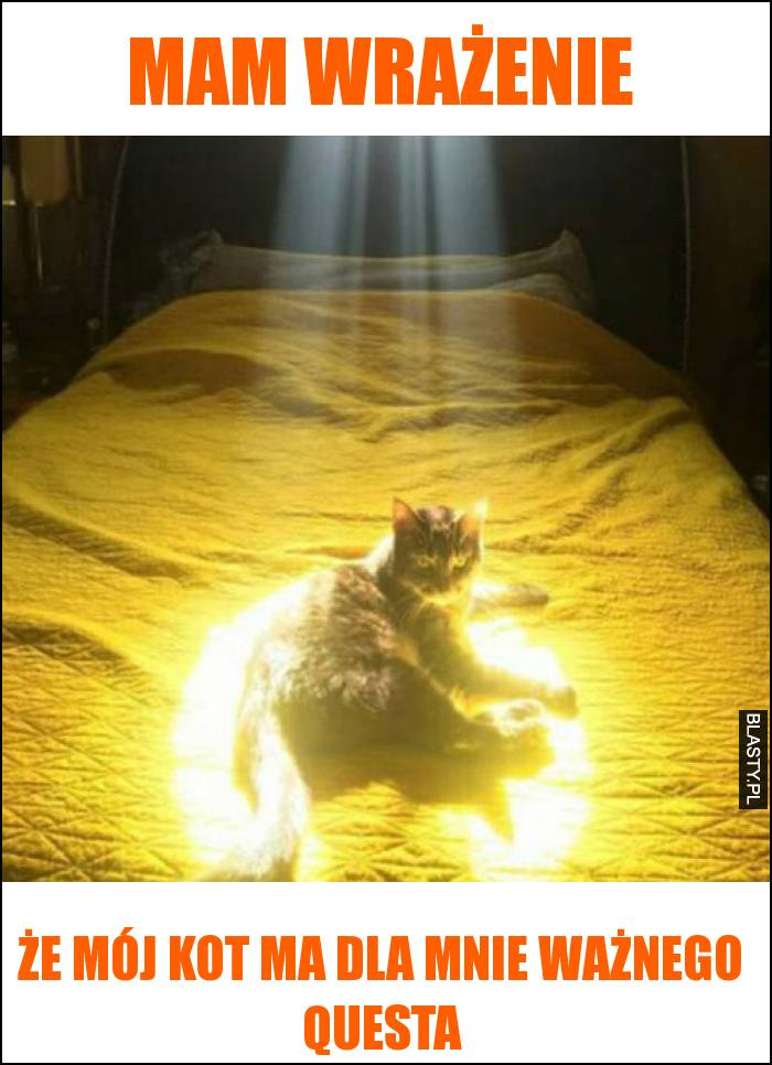 Mam wrażenie że mój kot ma dla mnie ważnego questa