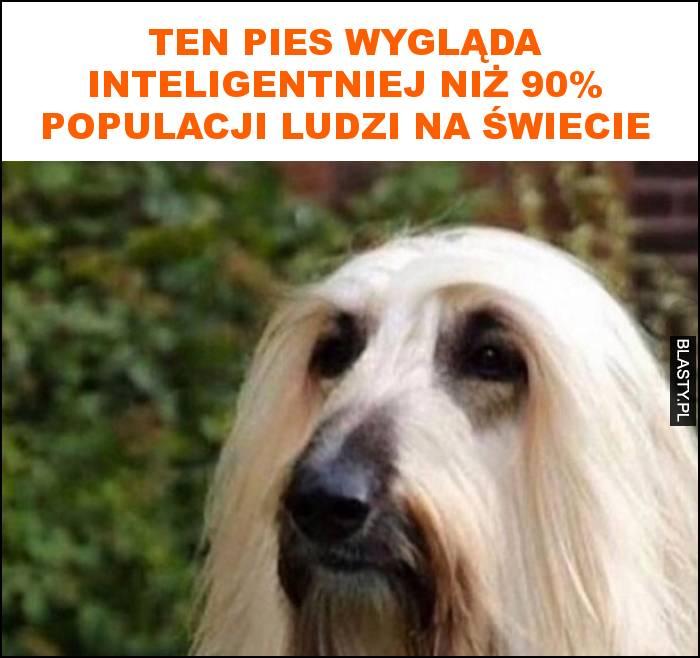 Ten pies wygląda inteligentniej niż 90% populacji ludzi na świecie