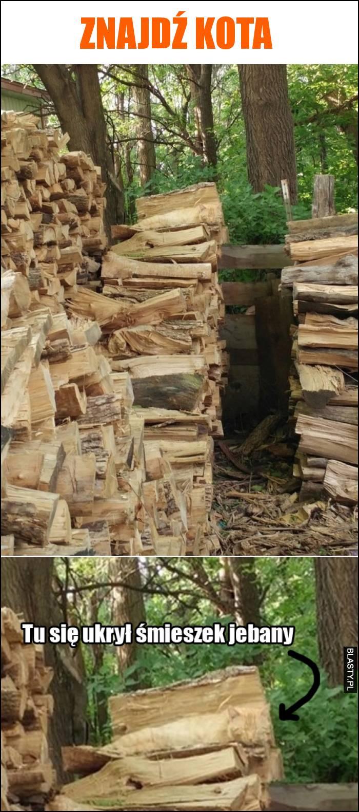 Znajdź kota