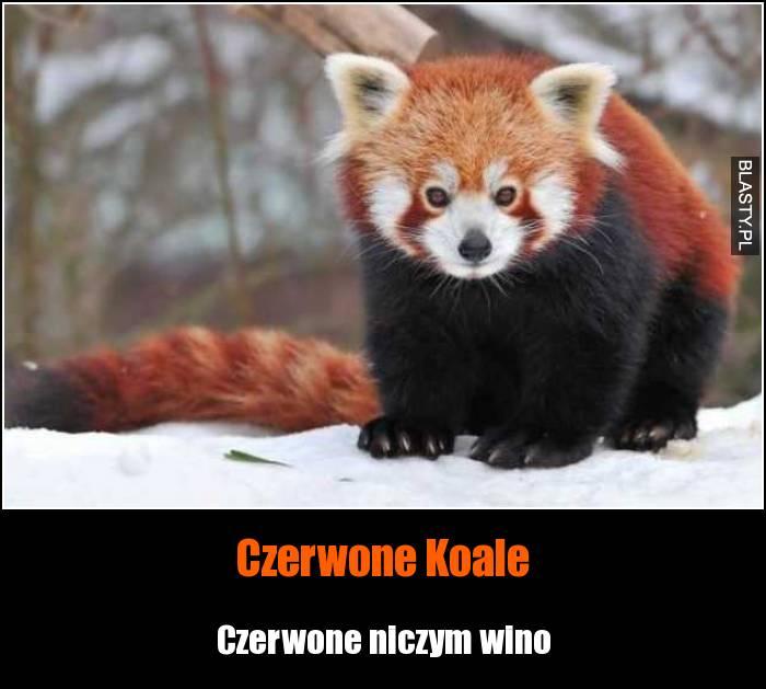 Czerwone Koale
