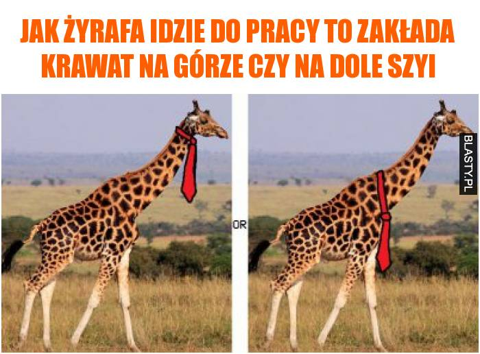 jak żyrafa idzie do pracy to zakłada krawat na górze czy na dole szyi
