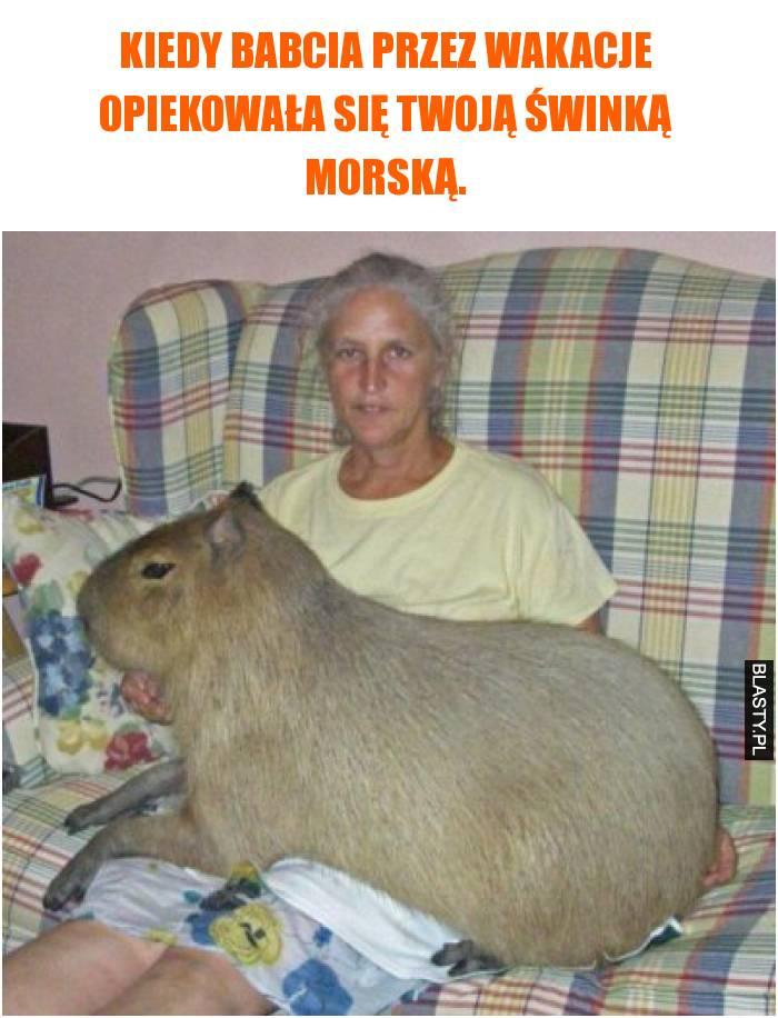 Kiedy babcia przez wakacje opiekowała się twoją świnką morską.