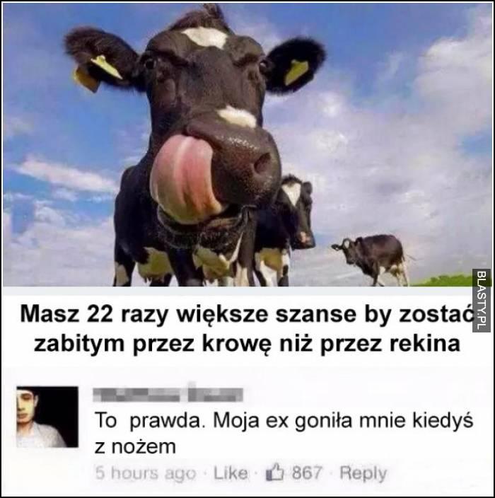 moja ex to krowa