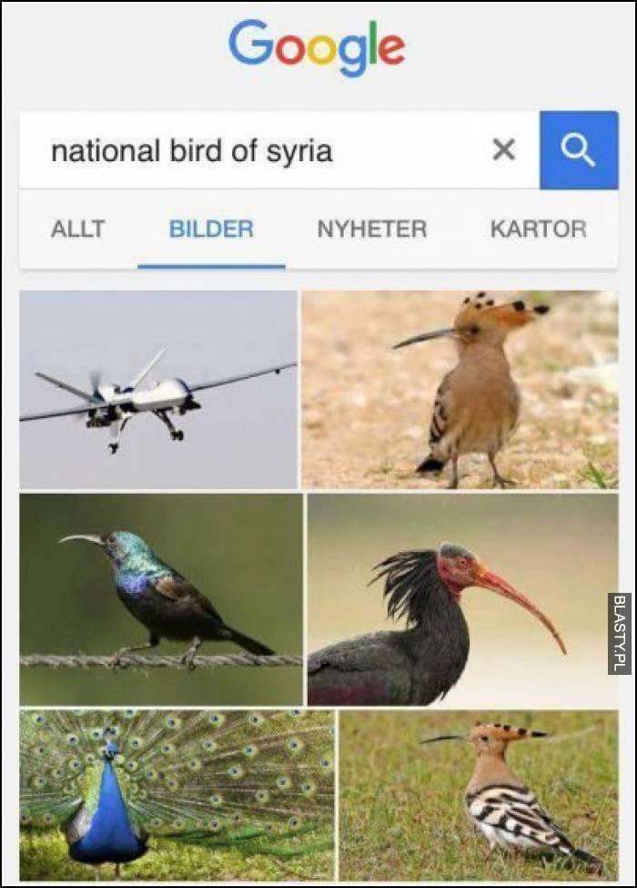 Nord Bird of Syria