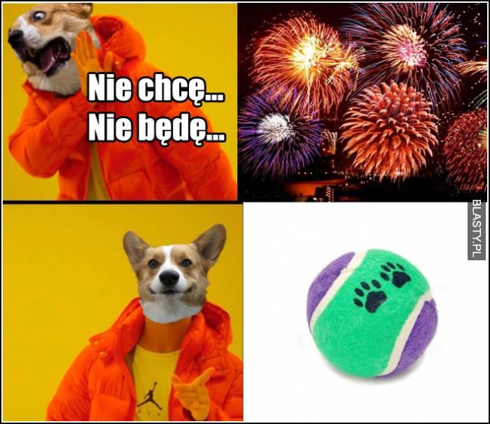 nowy rok wg. psów