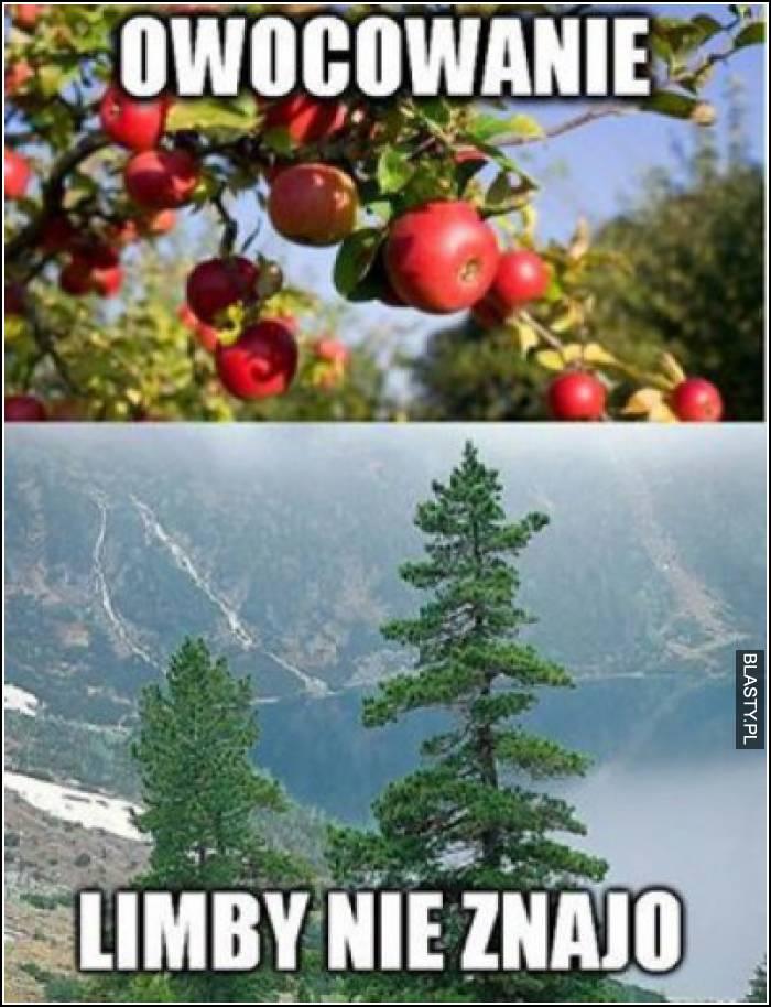 Owocowanie - limby nie znajo