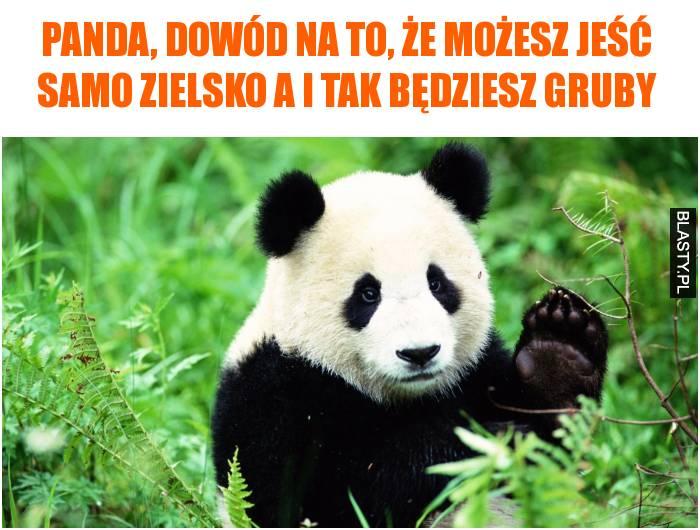 Panda, dowód na to, że możesz jeść samo zielsko a i tak będziesz gruby