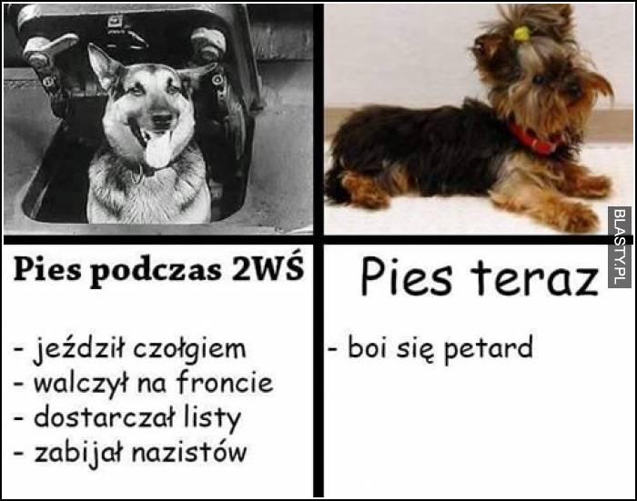 Pies podczas 2 Wojny Światowej vs pies teraz