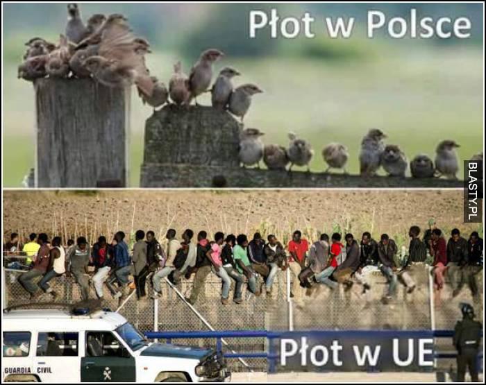płot w Polsce i płot w UE