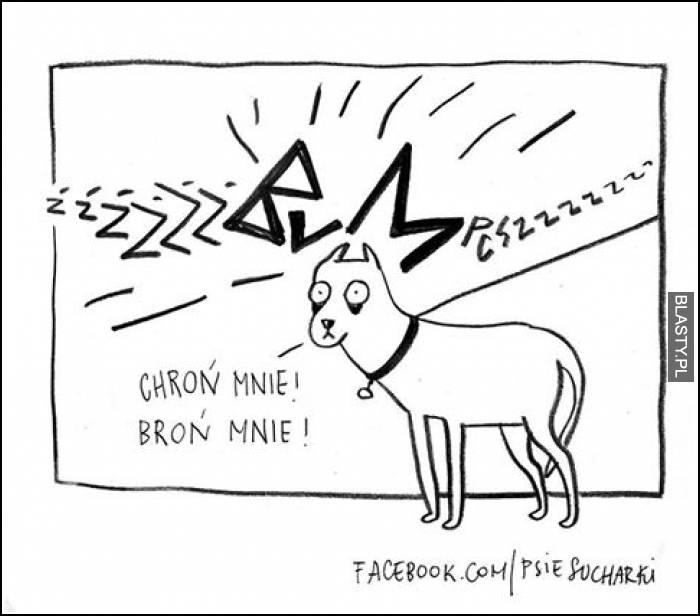 Psy i fajerwerki w sylwestra