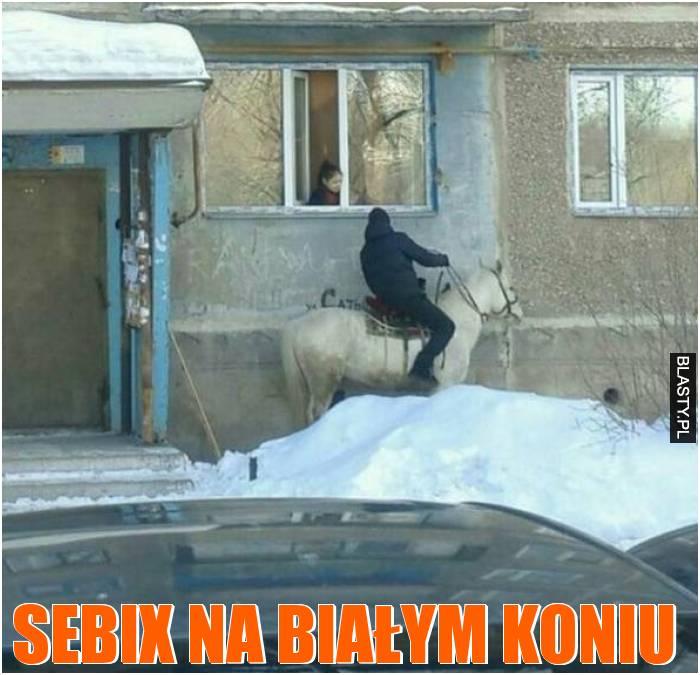 Sebix na białym koniu