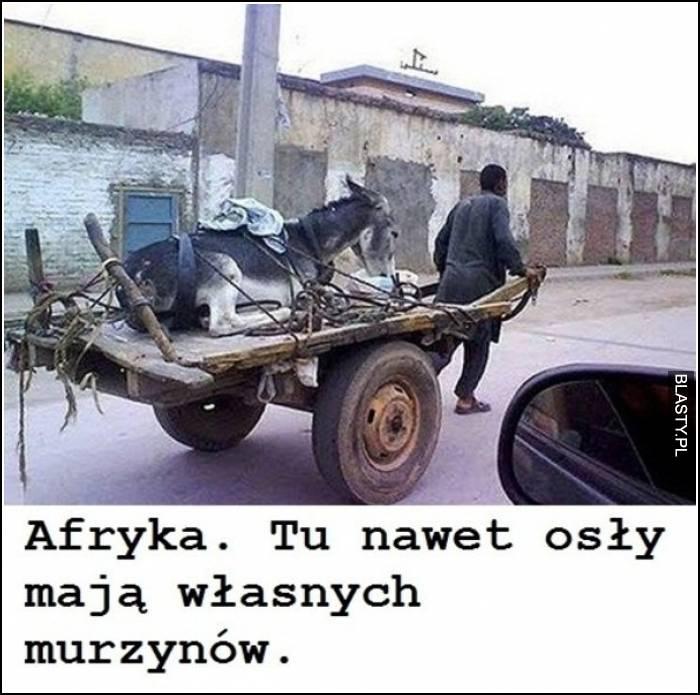 afryka - tu nawet osły mają własnych murzynów