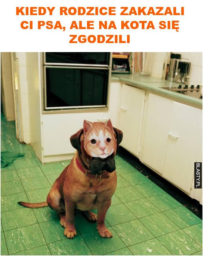 kiedy rodzice zakazali ci psa, ale na kota się zgodzili