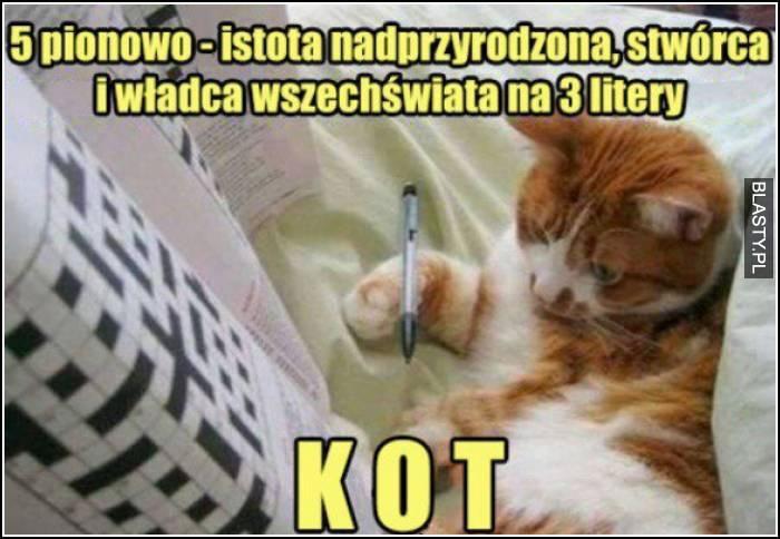 kot rozwiązuje krzyżówkę