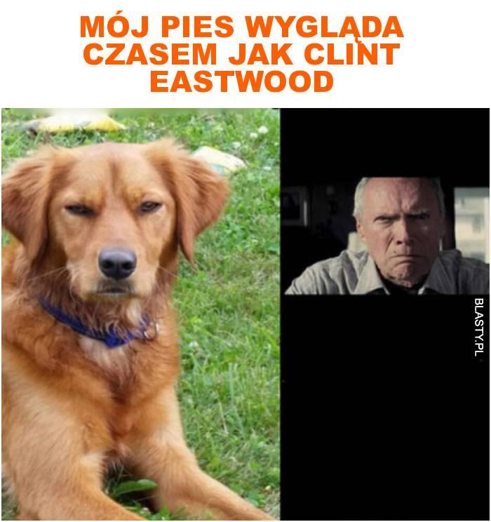Mój pies wygląda czasem jak clint eastwood