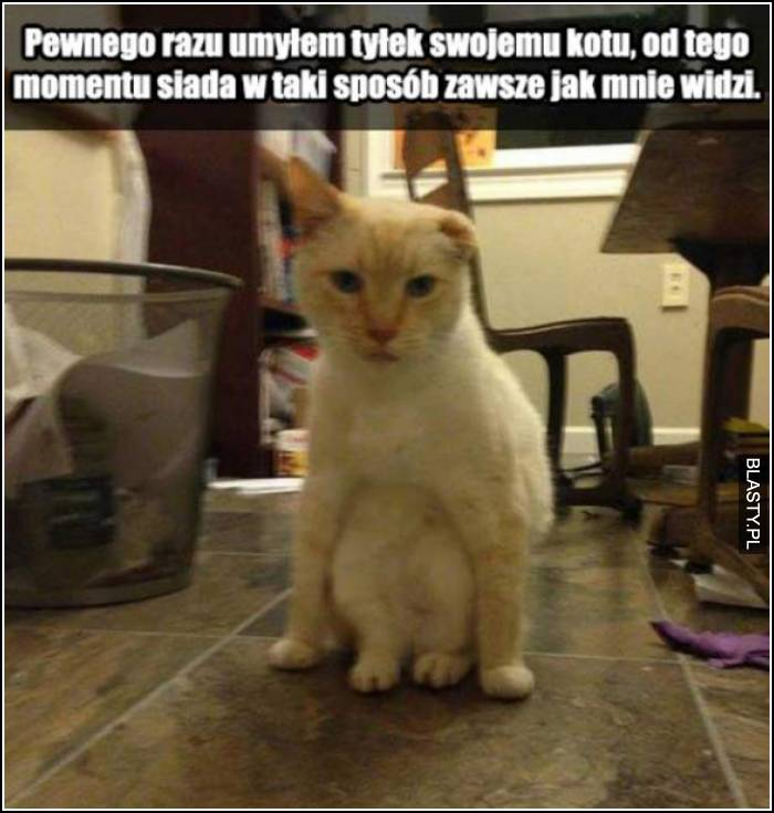 pewnego razu umyłem kotu tylek