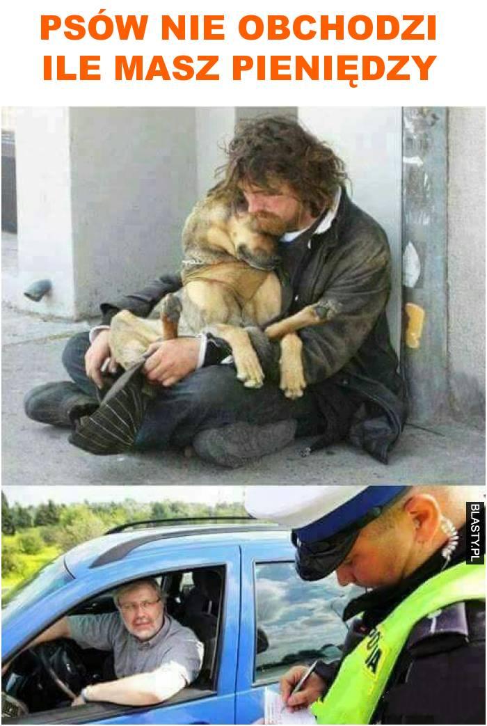 psów nie obchodzi ile masz pieniędzy