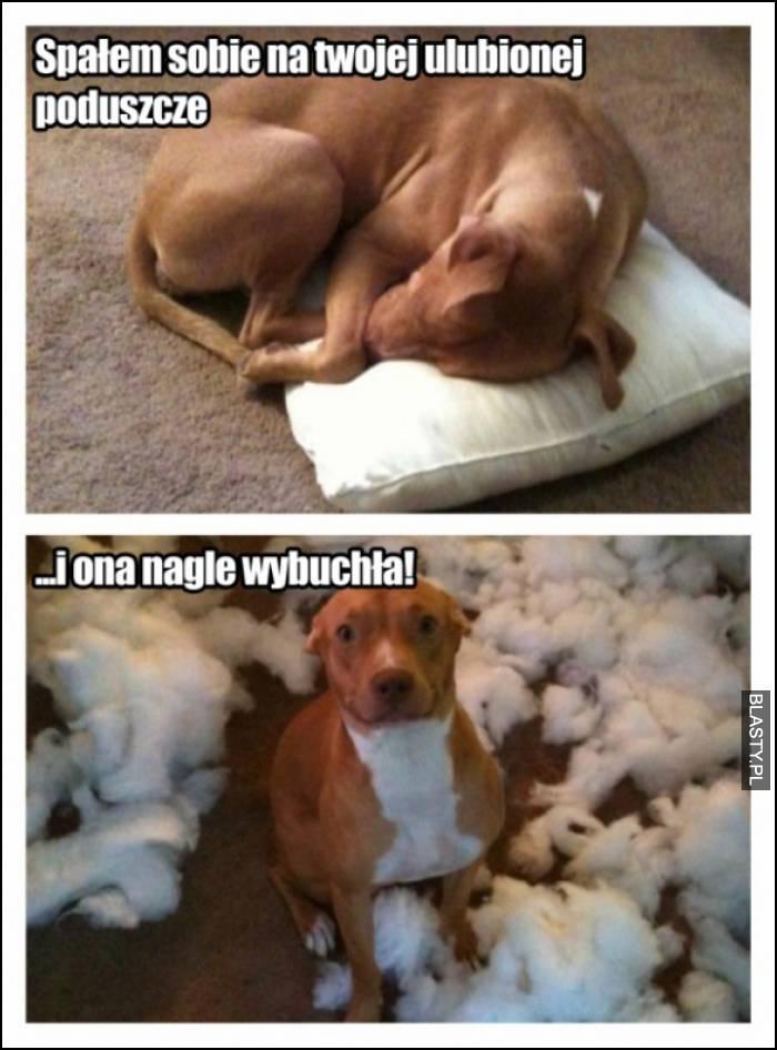spałem sobie na twojej ulubionej poduszce
