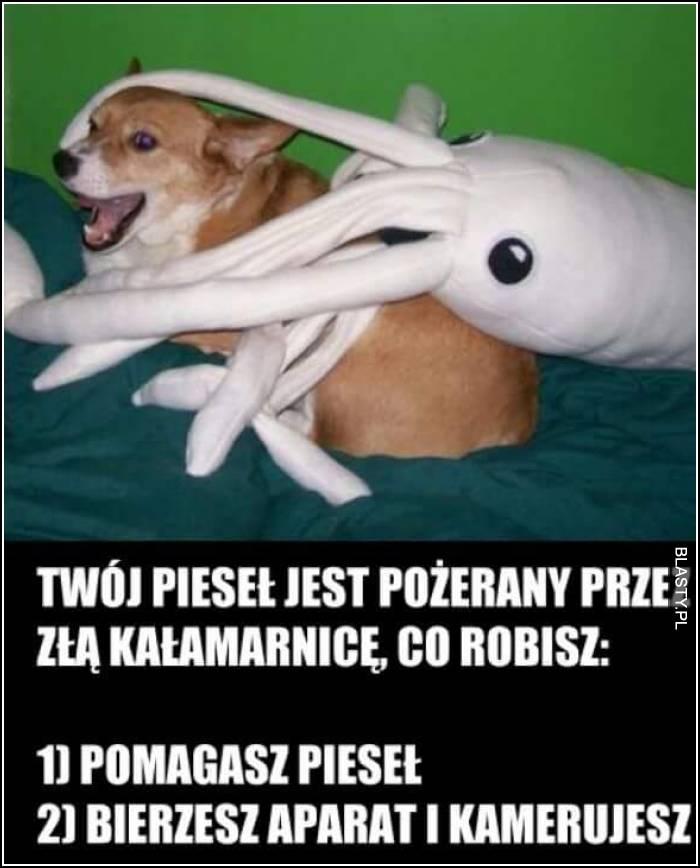 Twój pies jest pożerany