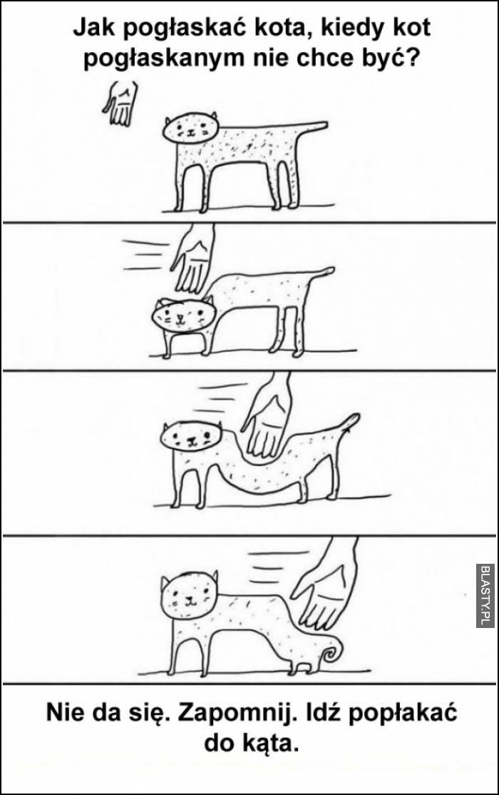 jak pogłaskać kota, kiedy kot pogłaskanym nie chce być