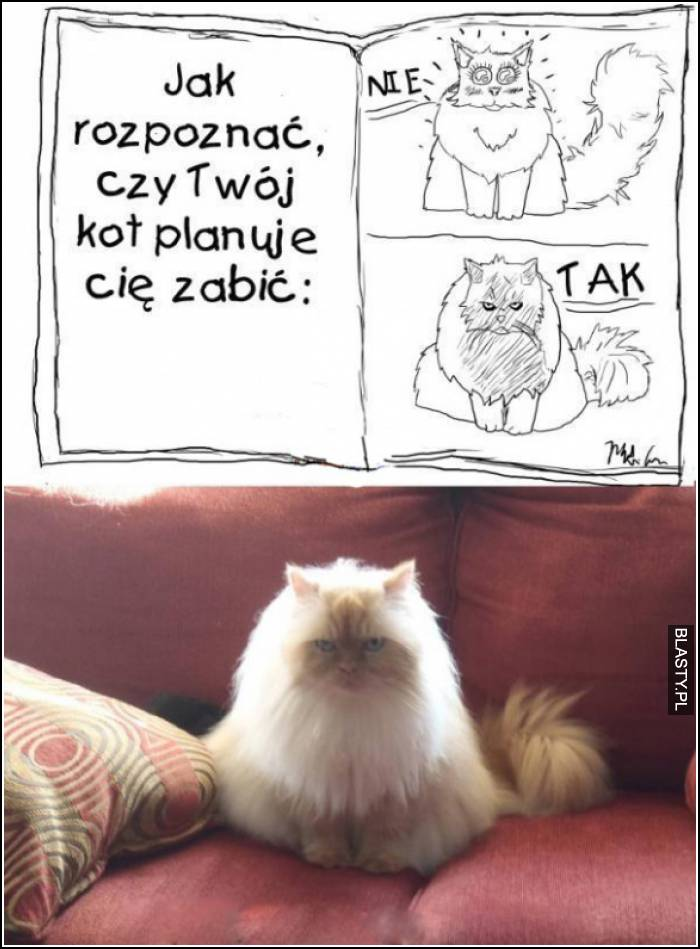 język kota