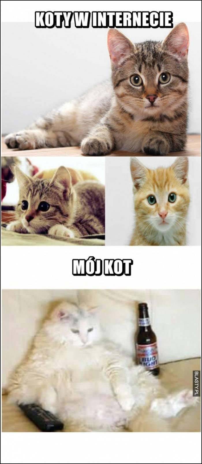 koty w internecie