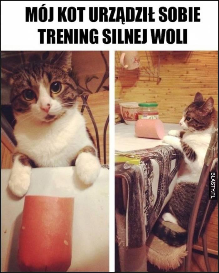 mój kot urządził sobie trening silnej woli