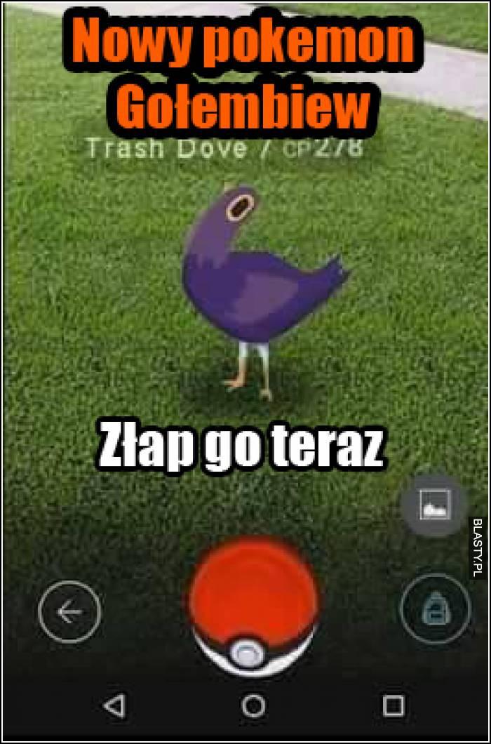 nowy pokemon gołębiew