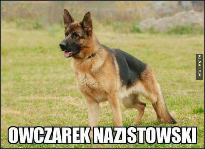 owczarek nazistowski