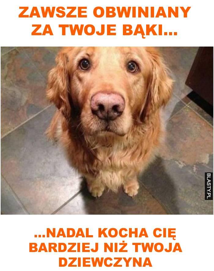 psia miłość i wierność