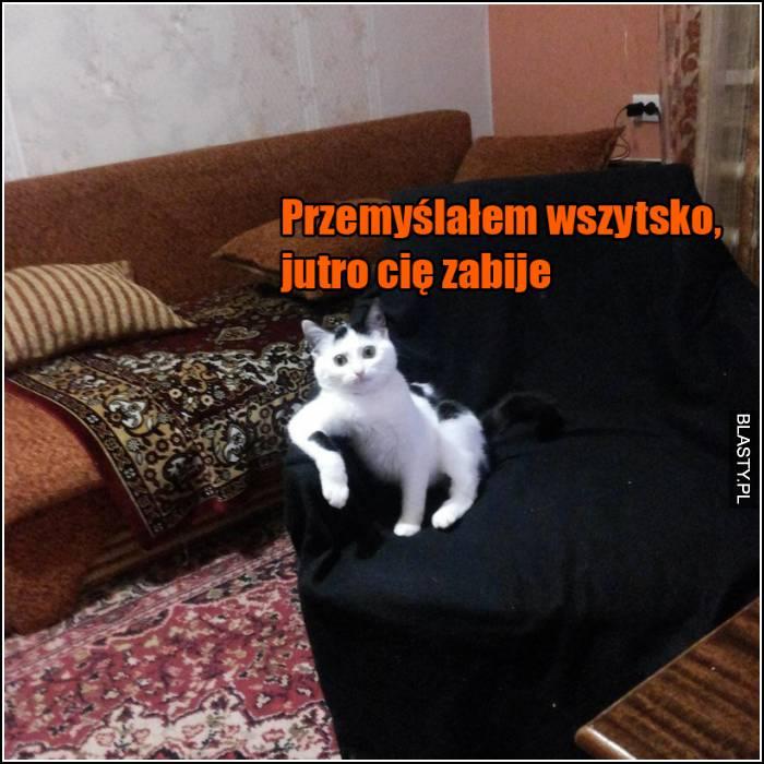 schizofreniczny kot