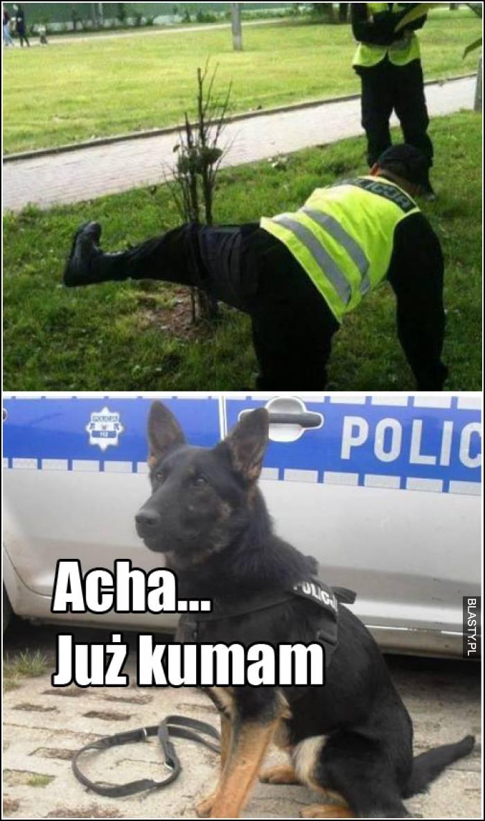 szkolenie psów policyjnych