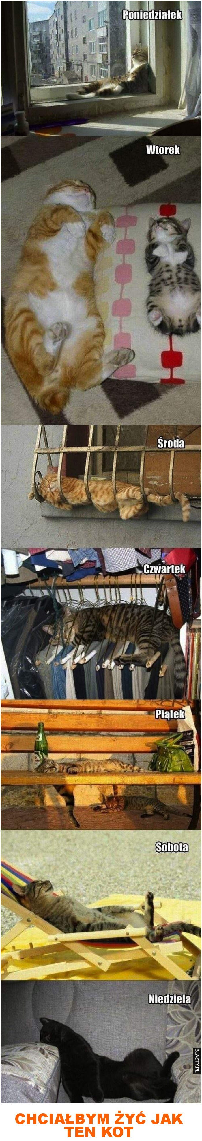 chciałbym żyć jak ten kot
