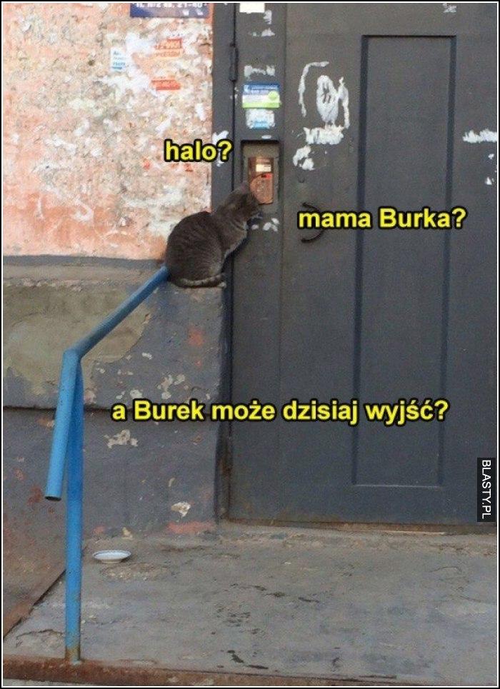 Halo ? mama burka