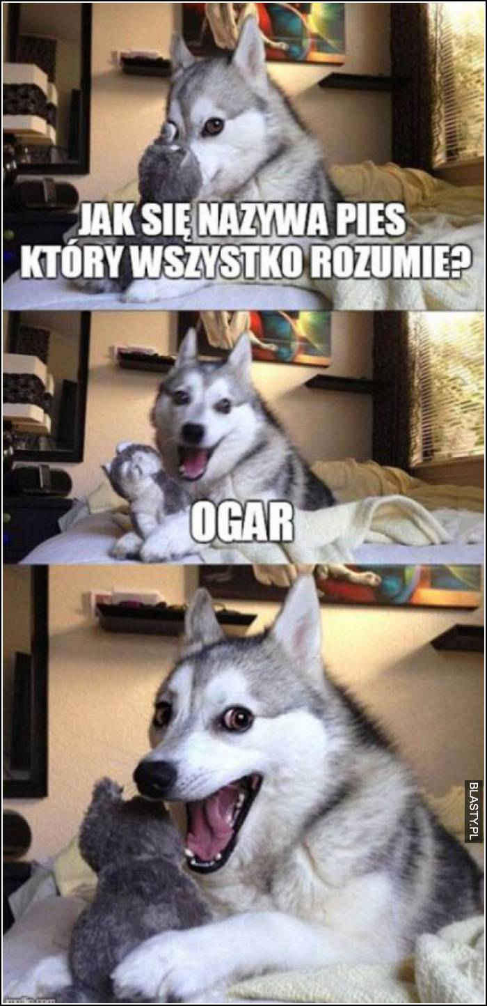 jak się nazywa pies, który wszystko rozumie