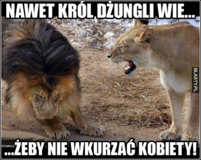nawet król dżungli wie, żeby nie wkurzać kobiety