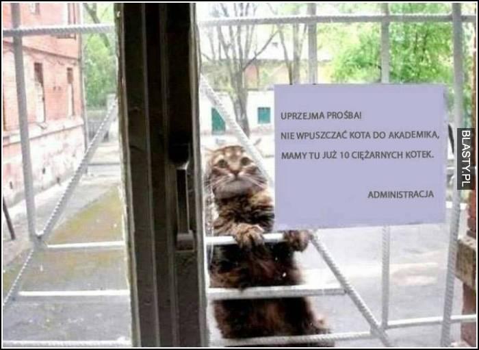 Nie wpuszczać kota do akademika