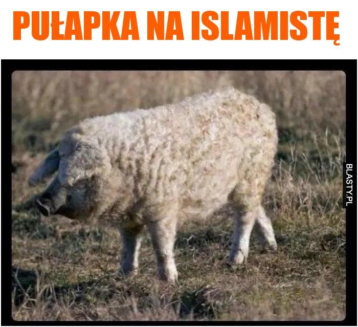 Pułapka na islamistę
