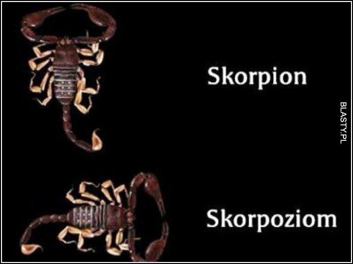 Skorpion vs skorpoziom