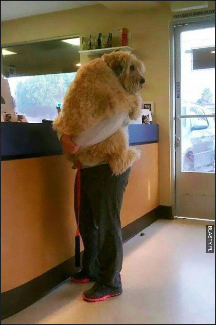To uczucie kiedy Twój pies boi sie wizyty u weterynarza